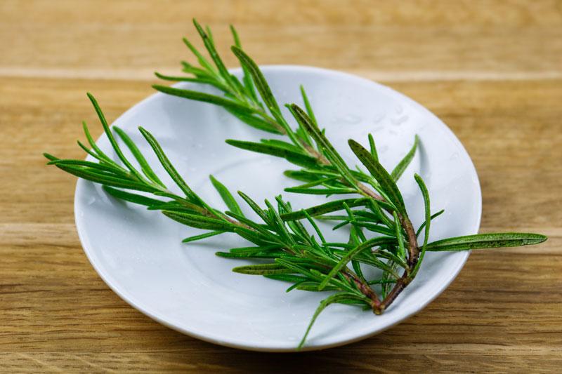 Spring Of Rosemary 8-19